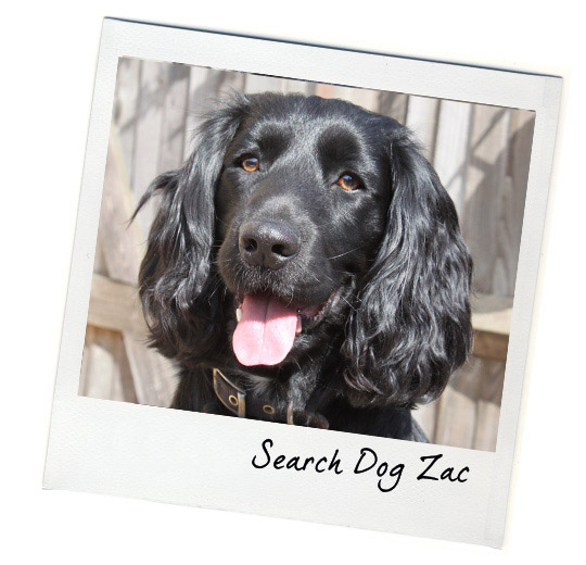 Search Dog Zac